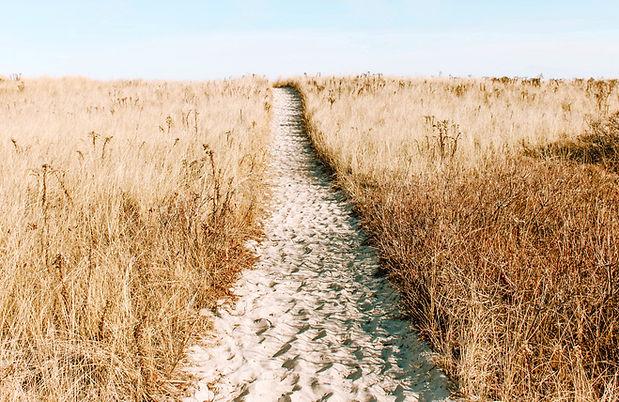 Hvede Field