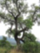 IMG_7402_edited.jpg