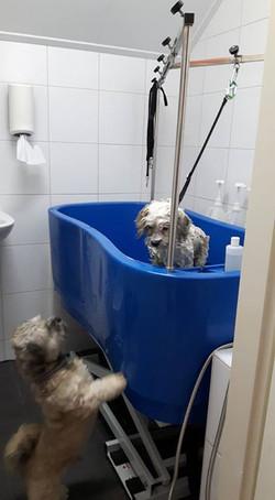 Leuk hè Max.jpg  Lief vrouwtje in het bad