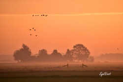 Golden hour polder Arkemheen