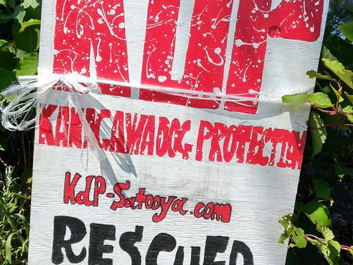 Kanagawa Dog Protection保護犬譲渡会