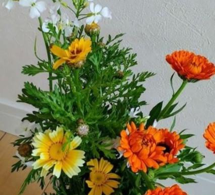 地産地消のお花たち