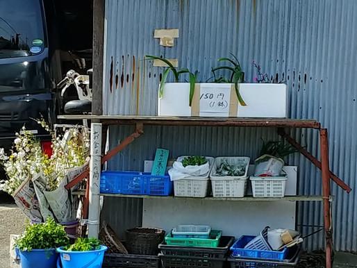 食は命の源 食料自給率37%の日本の未来は?