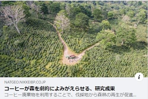 廃材コーヒーパルプで熱帯雨林が再生