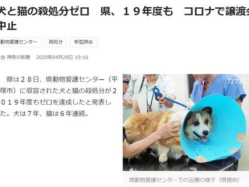 神奈川県は犬猫殺処分ゼロ?
