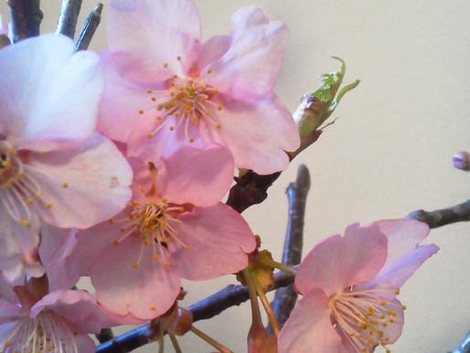 立春に願う希望の春