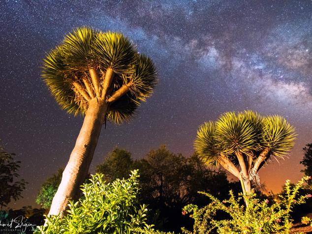 Milchstraße - Drachen Baum