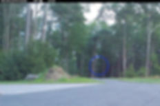 alien head in woods.jpg