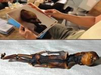 Nonhuman Corpse Found