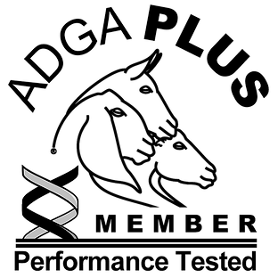 adga-plus-members-only-logo-web-transpar