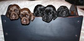 puppies 070.JPG