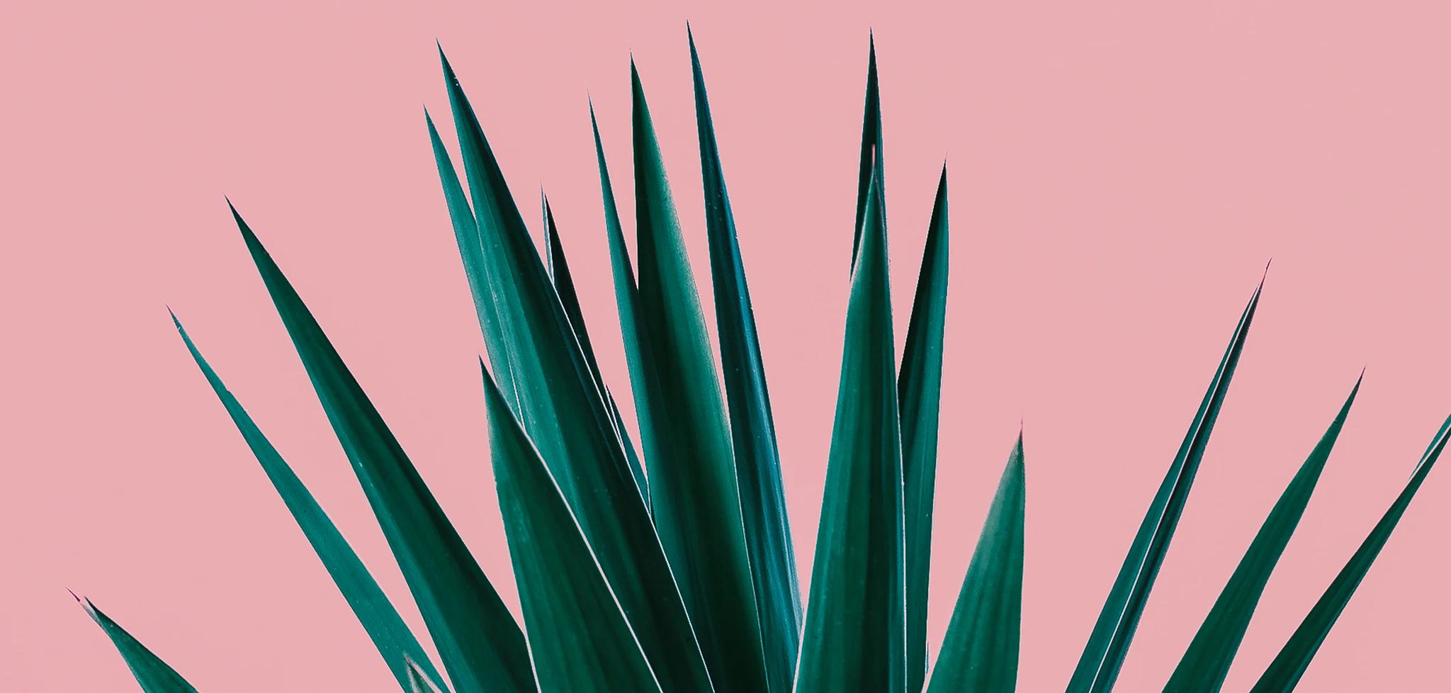 plants-header_2048x