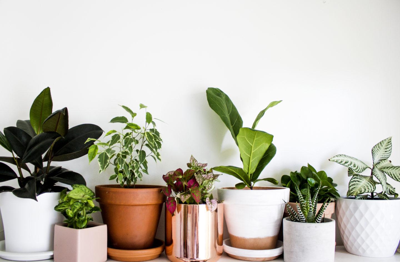plant-header-1440x944