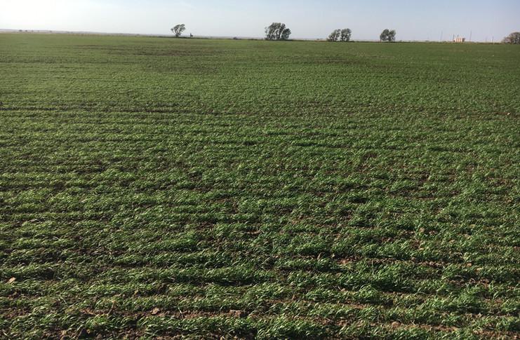 8-cropland.JPG