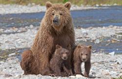 Alaska_3736