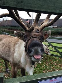 Reindeer tongue.jpg