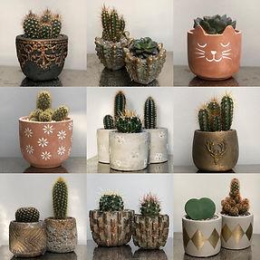 Cactus Parlour.jpg