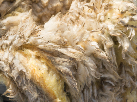 Memories of Ollerbrook Farm: Shearing Day