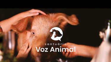 Vai Ter Porcô Parra Ceiá!  - Santuário Voz Animal