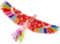 zakee_shariff_eagle_julie_mangaud_soins_