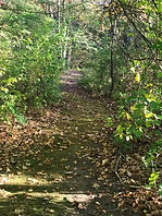 Unicorn Meadow woods trail.jpg