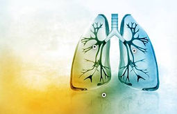 poumons.jpg