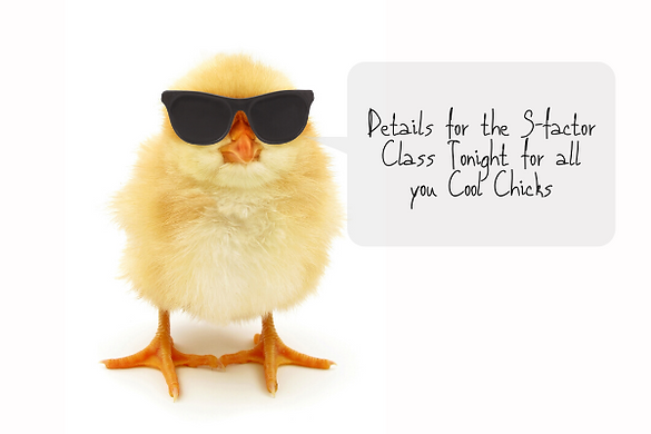 Copy of Copy of Cool Chicks-4.png