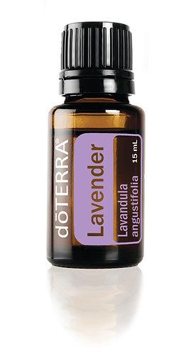 Lavender, Lavandula angustifolia
