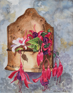 Terra Cotta Pink Flowers
