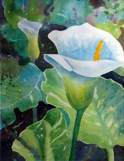 Longwood Lily