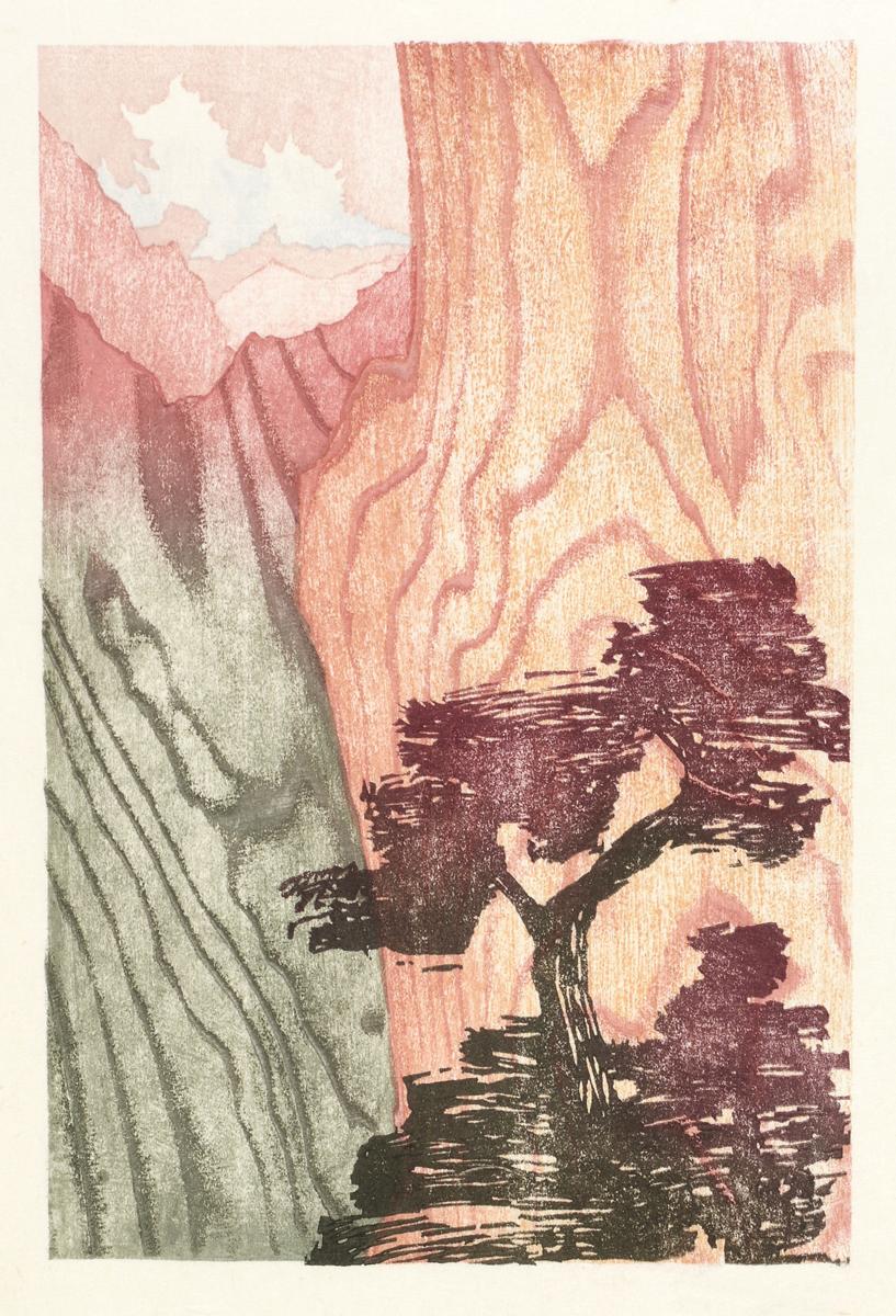 Mountain_pine
