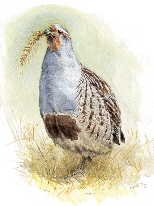 Goodyear Partridge