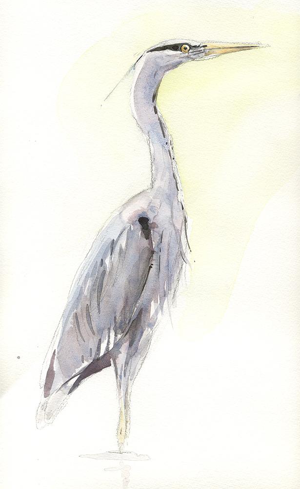 Heron Study 2