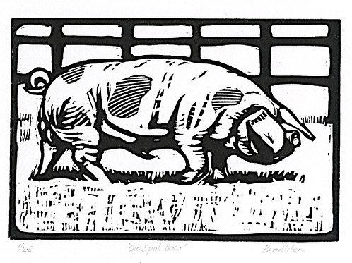Gloucestershire Old Spot Boar