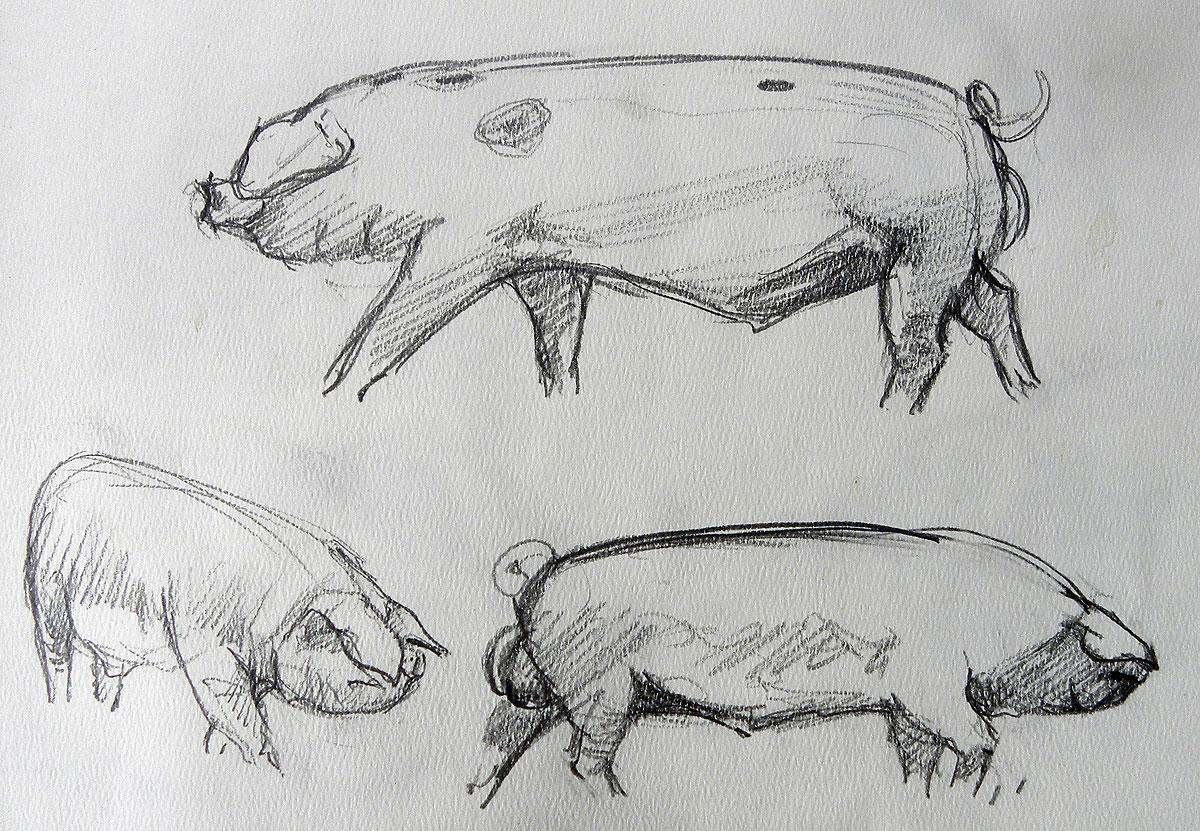 Old Spot boar