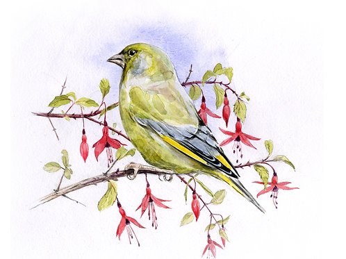 Greenfinch and Fuchsia