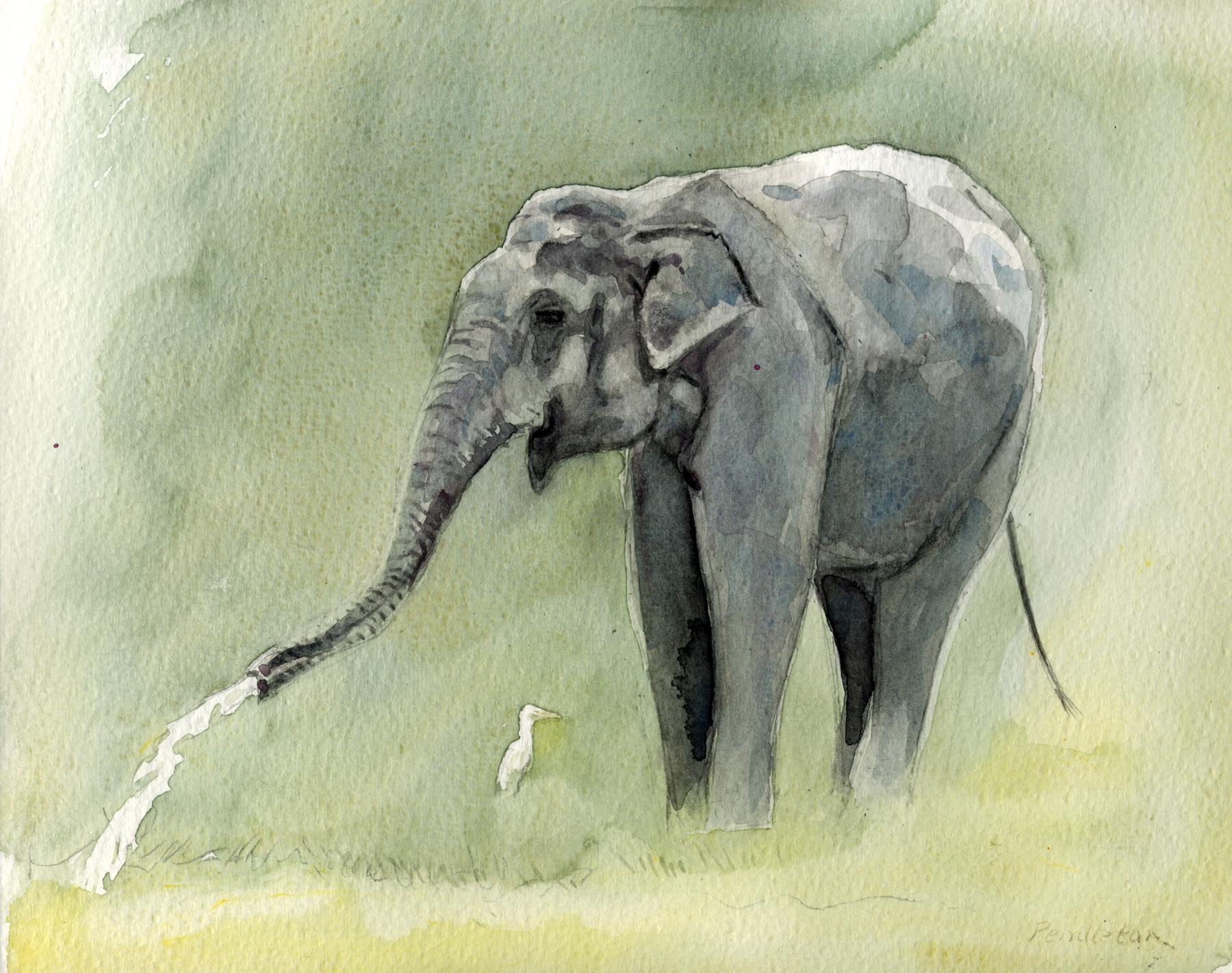 Elephant at Yala, Sri Lanka