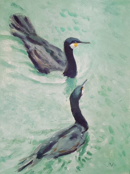 Japanese Cormorants