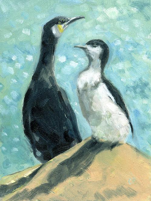 Cormorants, Llandewyn