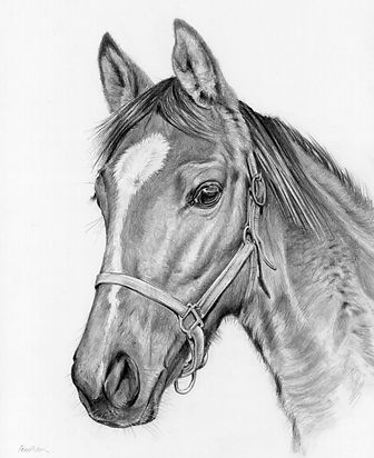 racehorse copy.jpg