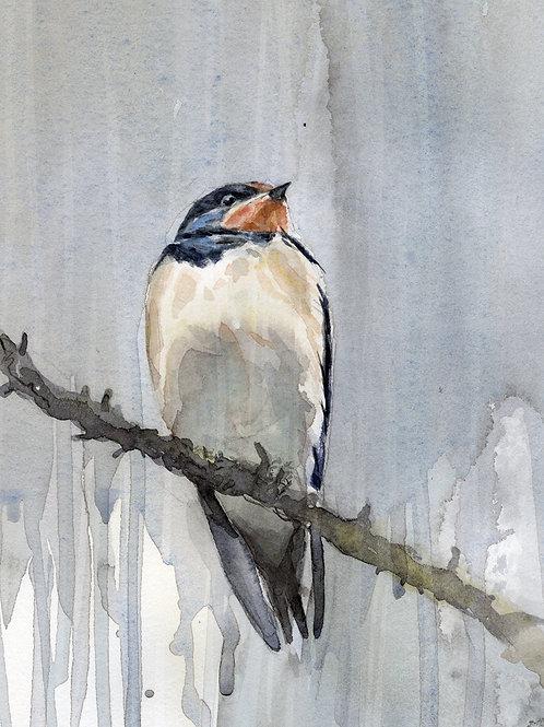 Swallow (juvenile)