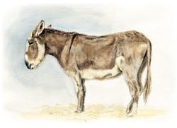 donkey-copy