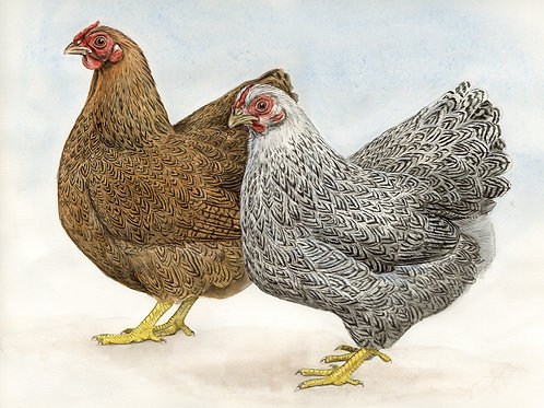 Partridge & Silver-Pencilled Wyandottes