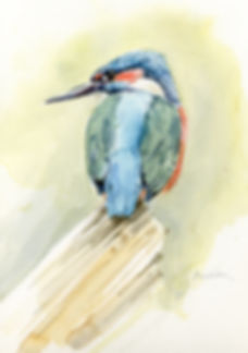 Kingfisher-3-copy.jpg