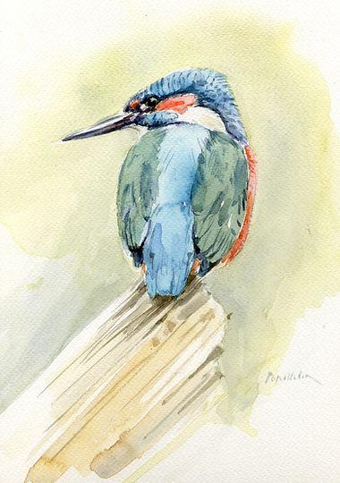 Kingfisher-3-copy.jpg