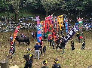 隠岐の牛突きは約800年の歴史を持つ伝統行事、屋外で行われる八朔牛突き大会で、牛のまわりで幟を手にする人々と見物客