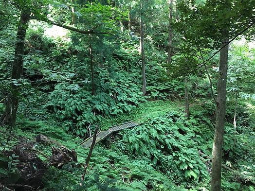 隠岐の島、自然回帰の森と遊歩道