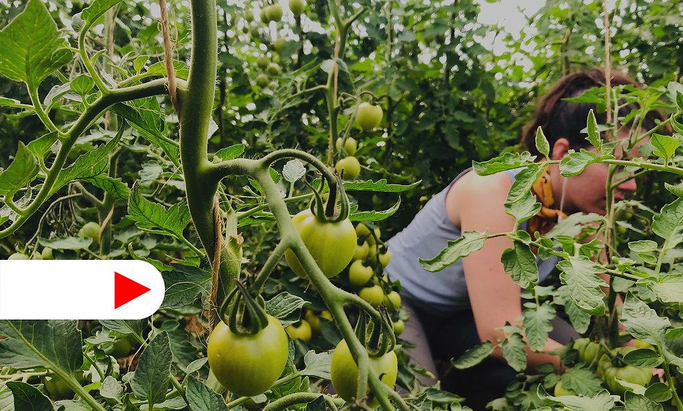 Curso Online | Huerto Biointensivo - Entendiendo el Huerto como un Negocio | Agricultura Orgánica Biointensiva