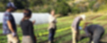 Curso el Huerto como Negocio -  Agricultura Organica Regenerativa