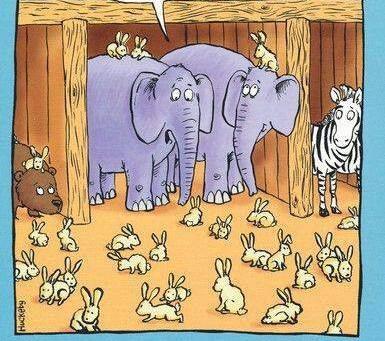 Noah's Ark Humor